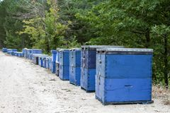 Blue bee hives in the field at Thassos. Rows of Coloured beehives in the field at Thassos Stock Images