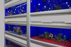 Colorful Tropical fish aquariums. Rows of colourful Tropical fish tanks stock photos