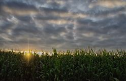 Rows of Corn Stock Photography
