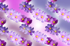 Rows of Cosmos in a seamless background Royalty Free Stock Images