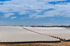 Rows of covered crops in field under sky Royalty Free Stock Photography