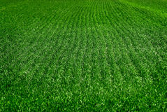 Rows of Crops Royalty Free Stock Photos