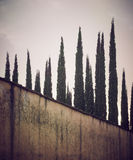 Rows of cypress trees in Tuscany Royalty Free Stock Image