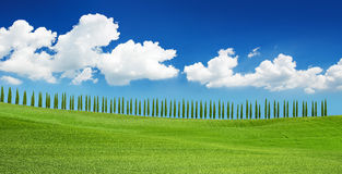 Rows of cypresses on the Tuscan hill Royalty Free Stock Image