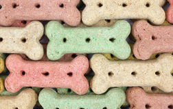Rows of dog biscuits Stock Image