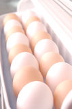 Rows of eggs Royalty Free Stock Photo