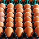 Rows of eggs in a plastic tray Royalty Free Stock Image
