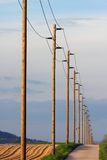 Rows of electric distribution pylons. Shot during golden hour stock photography