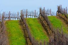 Rows of empty grape vines in vineyard Stock Photos