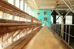 Rows of empty wooden benches in sporting hall. Tribune in gym for fans of matches with empty wooden seats Royalty Free Stock Photo