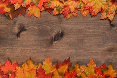 Rows of fall colored maple leaves Royalty Free Stock Photos