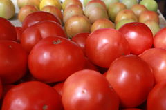 Rows of farm stand tomatoes stock images