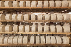 Rows of fermenting cheese Royalty Free Stock Photos