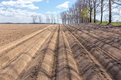 Rows on the field Stock Photography