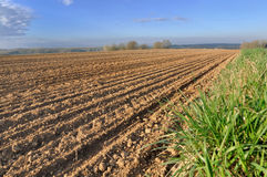 Rows in a field. Rows in plowed field under blue sky Royalty Free Stock Photos