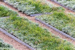 Rows Of Flower Beds stock photo