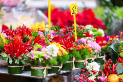 Rows with flowers at flowers market. Stock Image