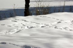 Rows of footsteps in big snow in the mountains on a sunny day royalty free stock photos