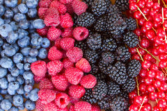 Rows of  fresh berries on table Royalty Free Stock Image