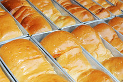 Rows of fresh bread Stock Images
