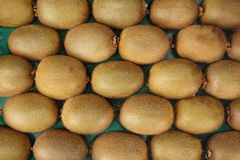 Rows of Fresh Kiwifruits Royalty Free Stock Photos