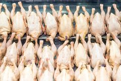 Rows of fresh raw chicken poultry at supermarket window-display. Poultry farm indystry. Livestock industry price index Royalty Free Stock Image