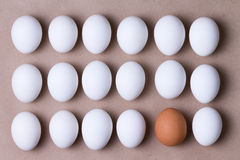 Rows of fresh white eggs with one brown one Stock Images