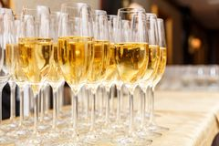 Rows of full champagne or sparkling wine glasses. Royalty Free Stock Photos