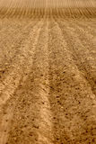 Rows of Furrows in Field Stock Photography