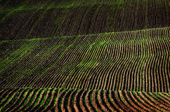 Rows of Furrows in Field Royalty Free Stock Photo