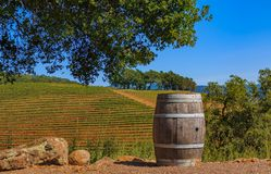 Rows of grape vines on rolling hills with a wine barrel in the foreground at a vineyard in Sonoma County, California, USA. Rows of grape vines on rolling hills royalty free stock image