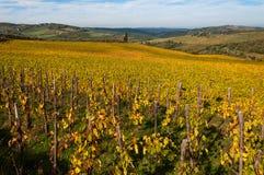 Rows of grape vines at vineyard in autumn , Chianti, Tuscany, Italy Royalty Free Stock Photos