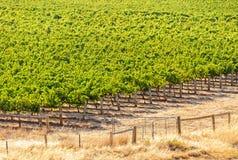 Vineyard - Barossa Valley Royalty Free Stock Photo