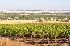 Vineyard - Barossa Valley Stock Image