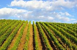 Vineyard blue sky and clouds Stock Photos