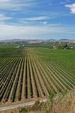Fine wines from a vineyard in New Zealand royalty free stock photos