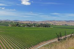 Fine wines from a vineyard in New Zealand royalty free stock image