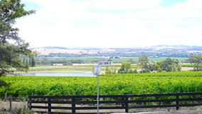 Rows of grapevines and surrounding valley from Lily Farm Road, Barossa Valley. Rows of grapevines and surrounding valley from Lily Farm Road in the Barossa Stock Photos