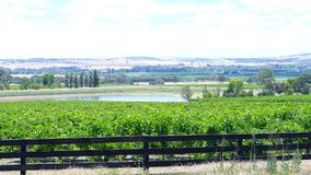 Rows of grapevines and surrounding valley from Lily Farm Road, Barossa Valley. Rows of grapevines and surrounding valley from Lily Farm Road in the Barossa Royalty Free Stock Photo
