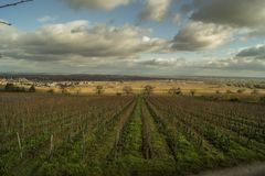 Rows of grapevines on a vineyard in november. Landscape showing rows of grapevines during fall with partially cloudy sky and villages in the background Stock Photos