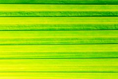 Rows of green leaf for background Royalty Free Stock Image