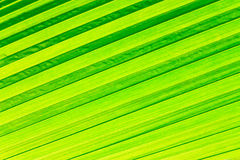 Rows of green leaf for background Royalty Free Stock Images