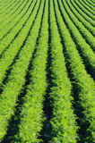 Rows on green plant Stock Photo
