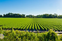 Rows on green plant Royalty Free Stock Photos