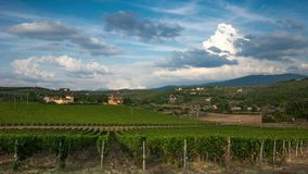 Rows of green vineyards in Chianti region on sunny day. Summer season, Tuscany. Timelapse stock footage
