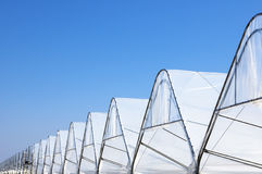 Rows of Greenhouse Tunels Stock Photo