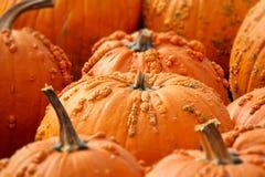 Rows of Halloween Pumpkins Stock Photography