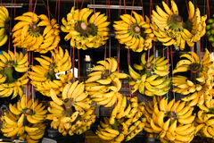 Rows of hanging yellow banana Royalty Free Stock Image
