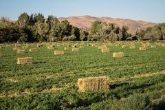 Rows of hay bales Stock Photos