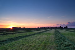 Rows of hay at sunrise Stock Images